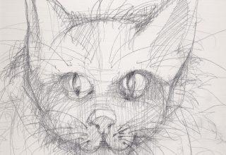 kedi-2